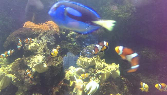 The customary 'Finding Nemo' tank. Dory was too fast to get into focus.