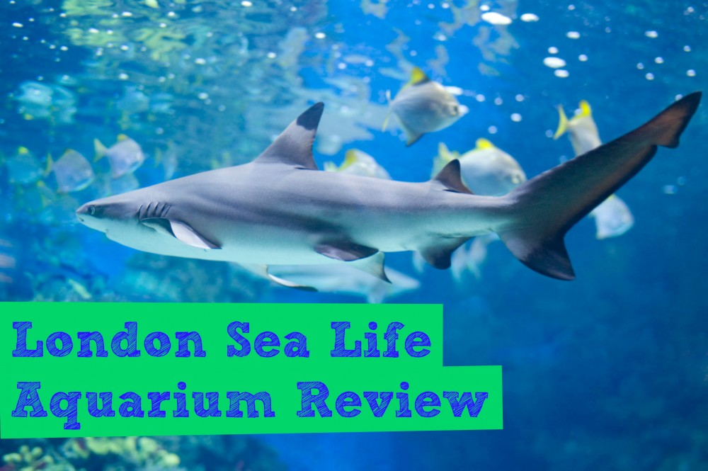 London Sea Life Aquarium Review 2015 Day Out In London