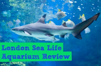 London Sea Life Aquarium Review 2015